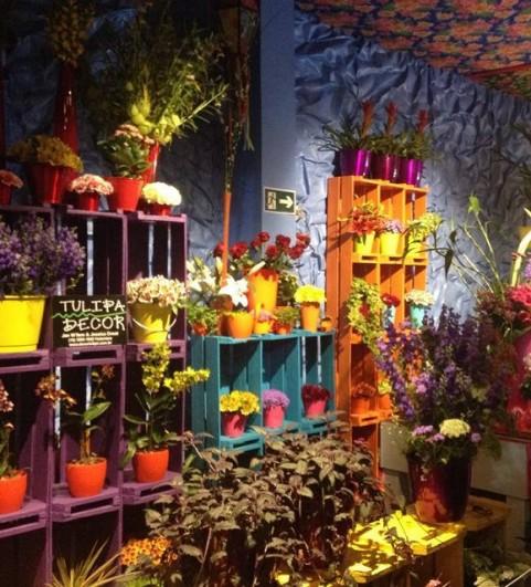 Holambra Cidade Das Flores Café Com Poesia